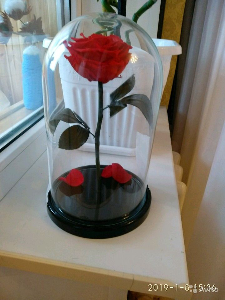 Роза в стеклянной колбе с коробкой купить на Зозу.ру - фотография № 2