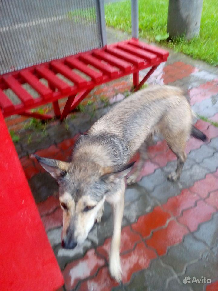 Кто потерял собаку, ищет хозяина, р-н ул. Прониной