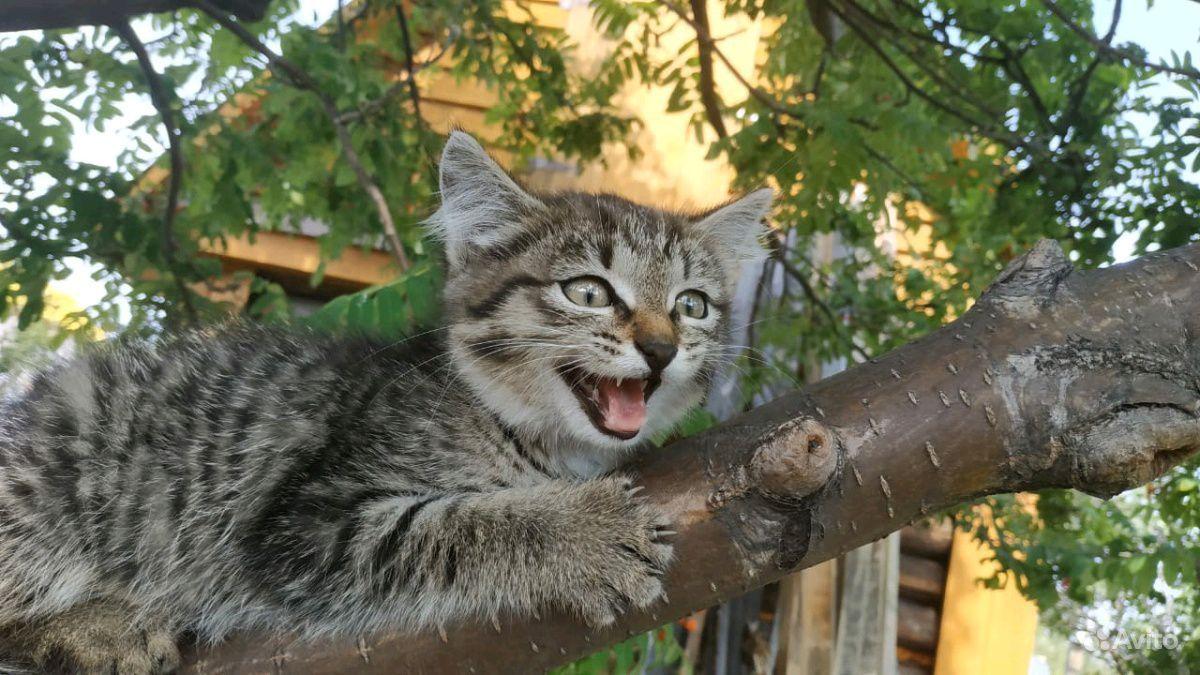 Кошечка ищет заботливых и любящих хозяев