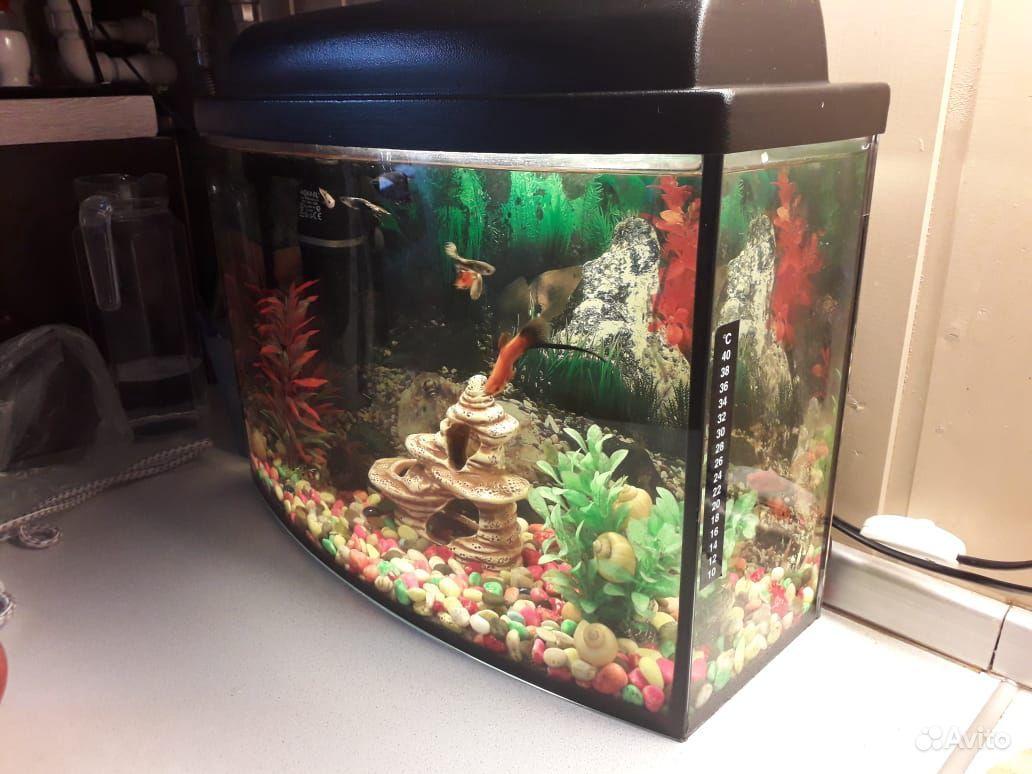 Аквариум с рыбками 25 литрой купить на Зозу.ру - фотография № 4