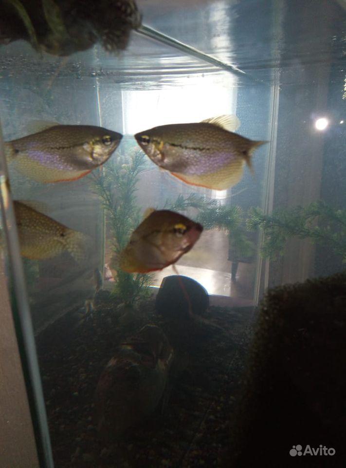 Рыба купить на Зозу.ру - фотография № 5