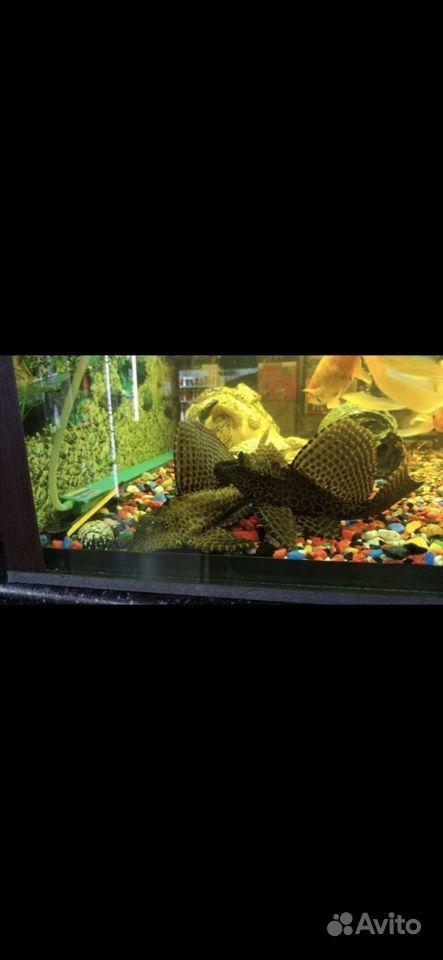 Готовый аквариум купить на Зозу.ру - фотография № 7