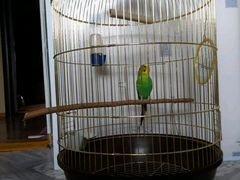 Продается попугай с клеткой, зеркало,качелей