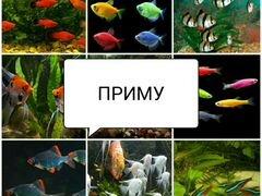 Аквариумные рыбки, сомы, креветки