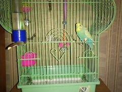 Папугай с клеткой