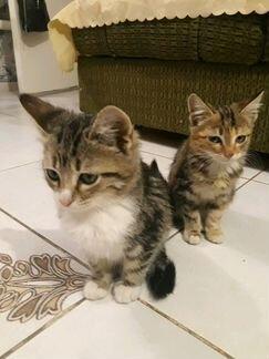 кошки фото в пролетарске основных элементов улучшающих