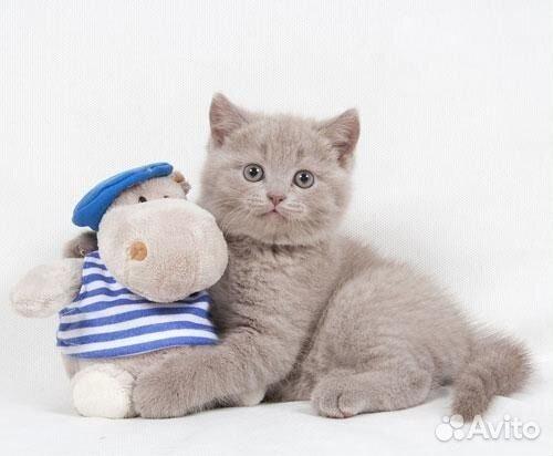 Кошки в Санкт-Петербурге купить по выгодной цене на доске ...