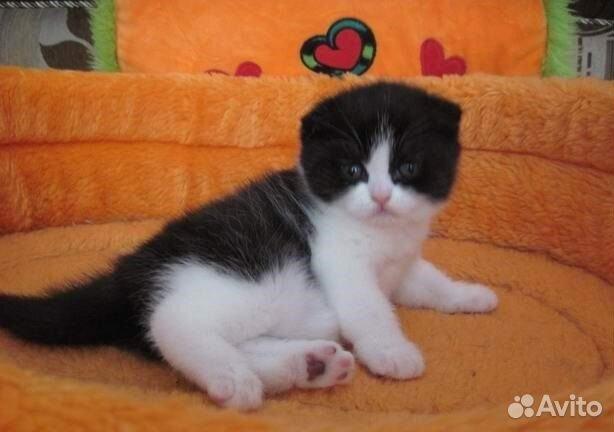 Найди кота — онлайн игра - FunKot