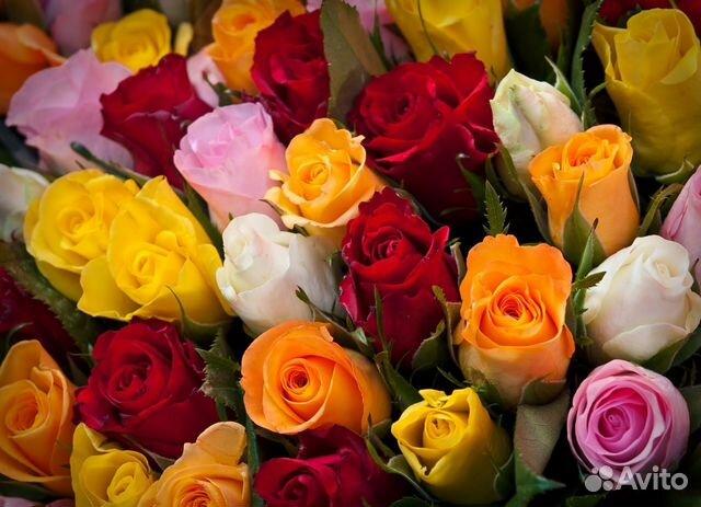 Живые цветы олтом челябинск где купить цветы комнатные растения