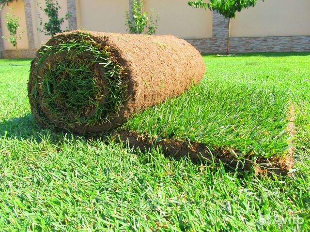 Картинки по запросу купить рулонный газон от производителя
