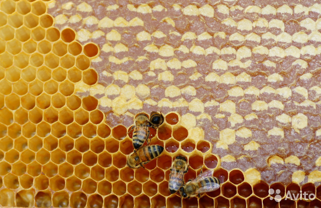 Соты медовые  89237901300 купить 1