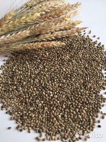 Семена конопли купить оборудование конопля марихуана