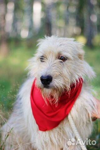 Собака неженка Иви в добрые руки купить на Зозу.ру - фотография № 3