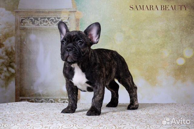 Собаки купить на Зозу.ру - фотография № 4