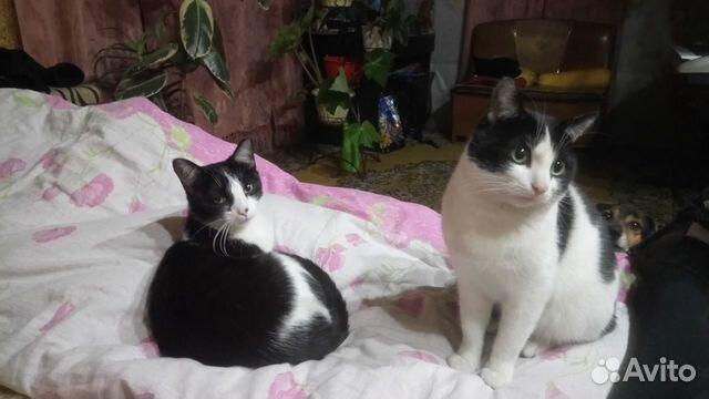 Кошечка с котиком мышеловы  89501307486 купить 1