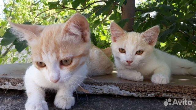 Котята в добрые руки  89787106687 купить 2