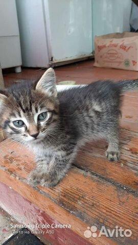 Котята  89144710185 купить 1
