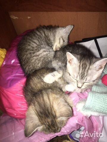 Котята в добрые руки даром  89833975530 купить 2
