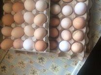Яйцо куриное деревенское