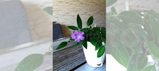 Комнатные цветы купить самара, октябрьский башкортостан магазин цветов