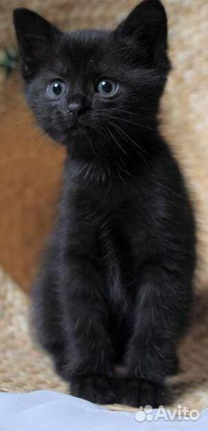 Котенок-девочка  89879370220 купить 2