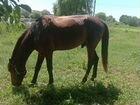Фотосессии и катание на лошади