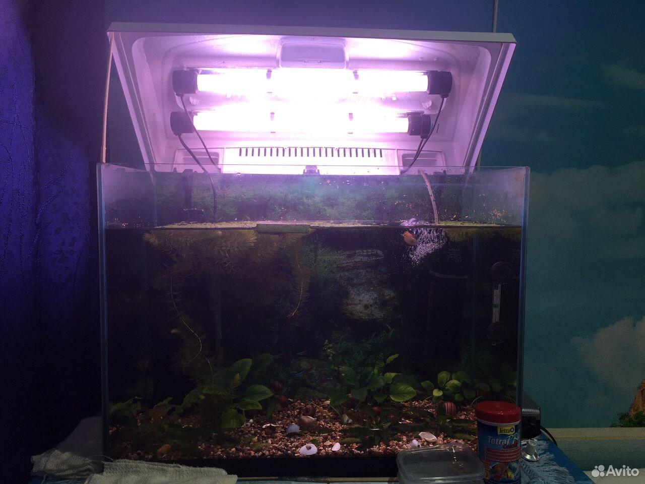 Aquarium 89825525555 buy 2