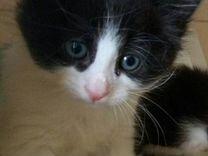Малыши котятки, возраст 1.5 месяца