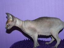 Кошка бамбино
