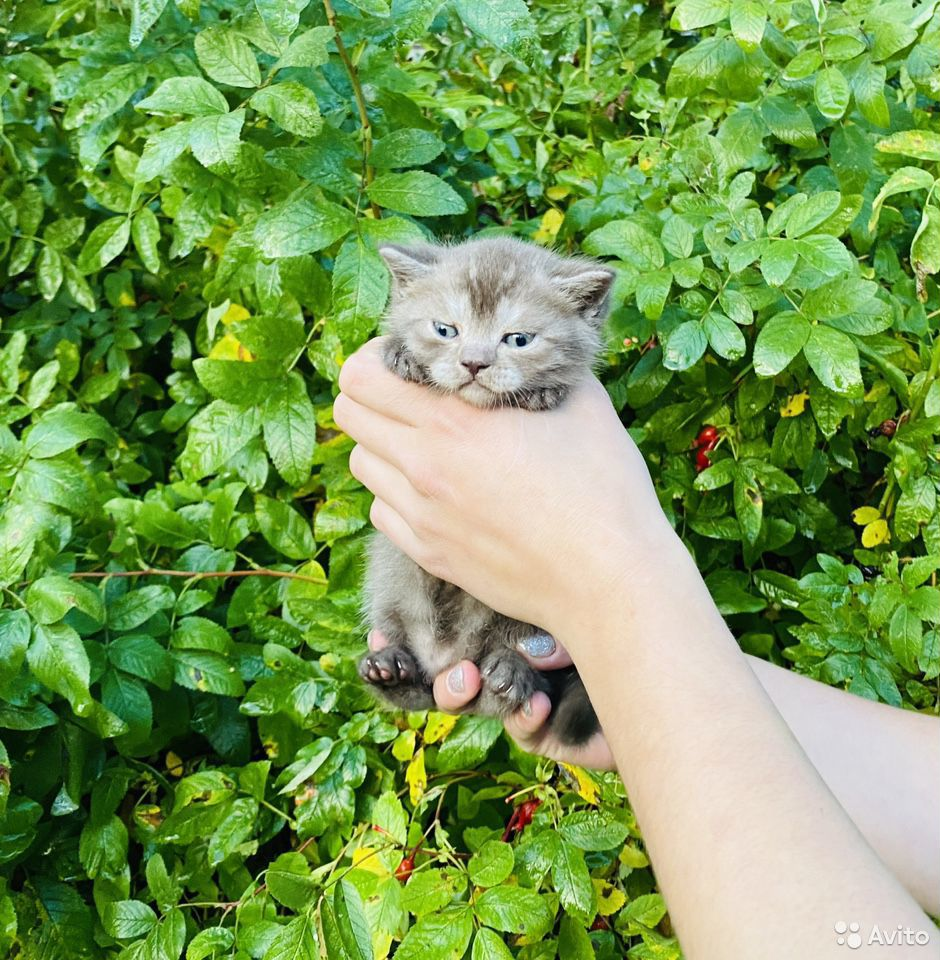 Кошечки и котики  89807082745 купить 7