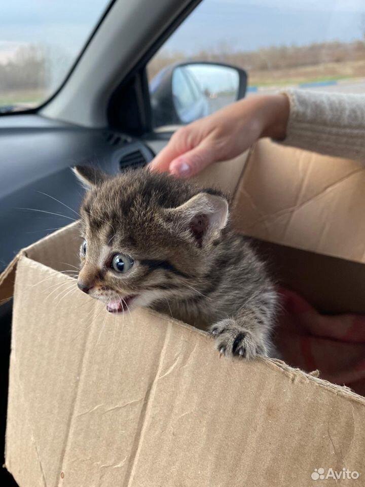 Продам котят  89831501338 купить 6