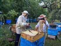 Пчелопитомник продает пчелопакеты