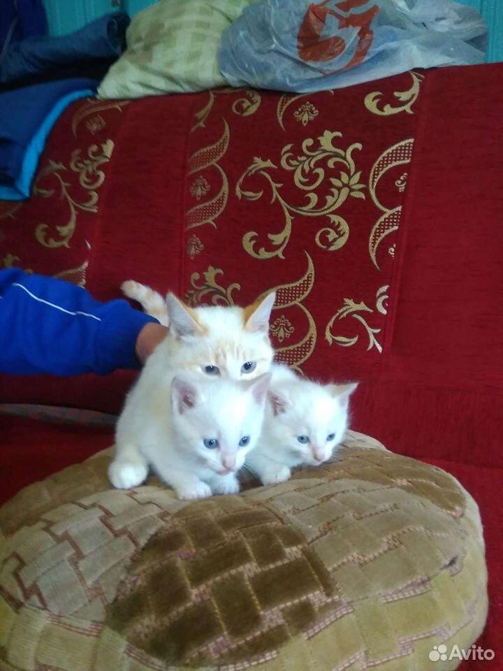 Котята. Мальчик и девочка  89101929687 купить 2